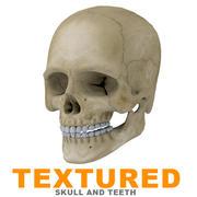 İnsan kafatası dokulu 3d model