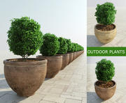 Bushes in Rustic Pots 3d model