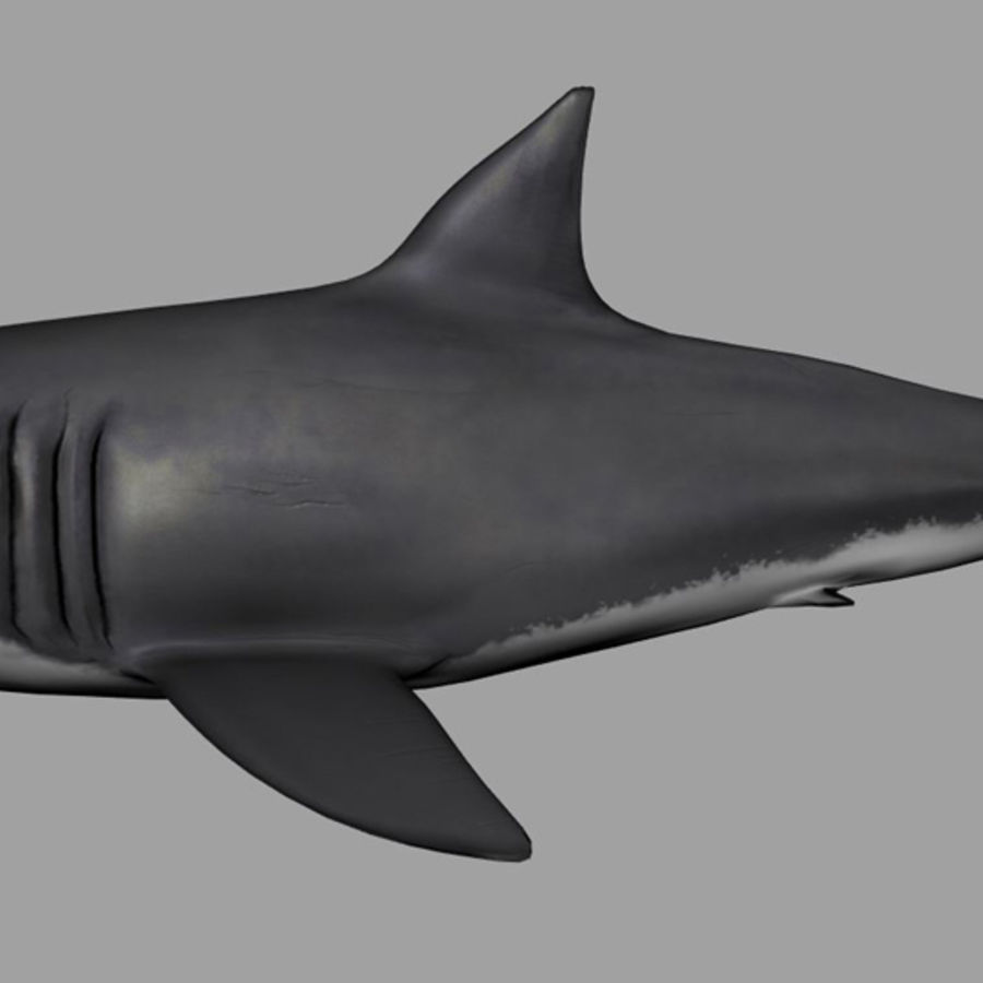 Jaws Bruce royalty-free 3d model - Preview no. 6