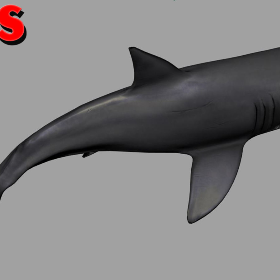 Jaws Bruce royalty-free 3d model - Preview no. 5