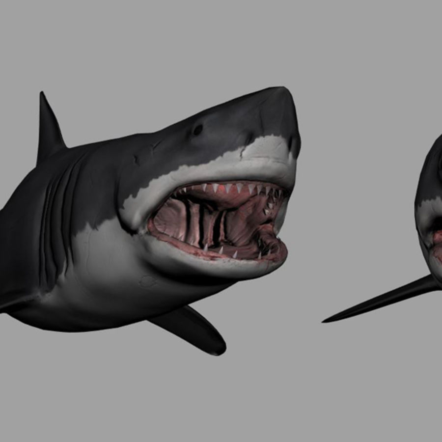 Jaws Bruce royalty-free 3d model - Preview no. 4