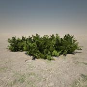 Small Bush 3d model