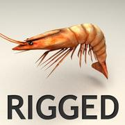 Shrimp Rigged 3d model
