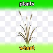 пшеница 3d model