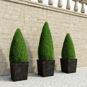 Krzewy w kształcie świecy 3d model