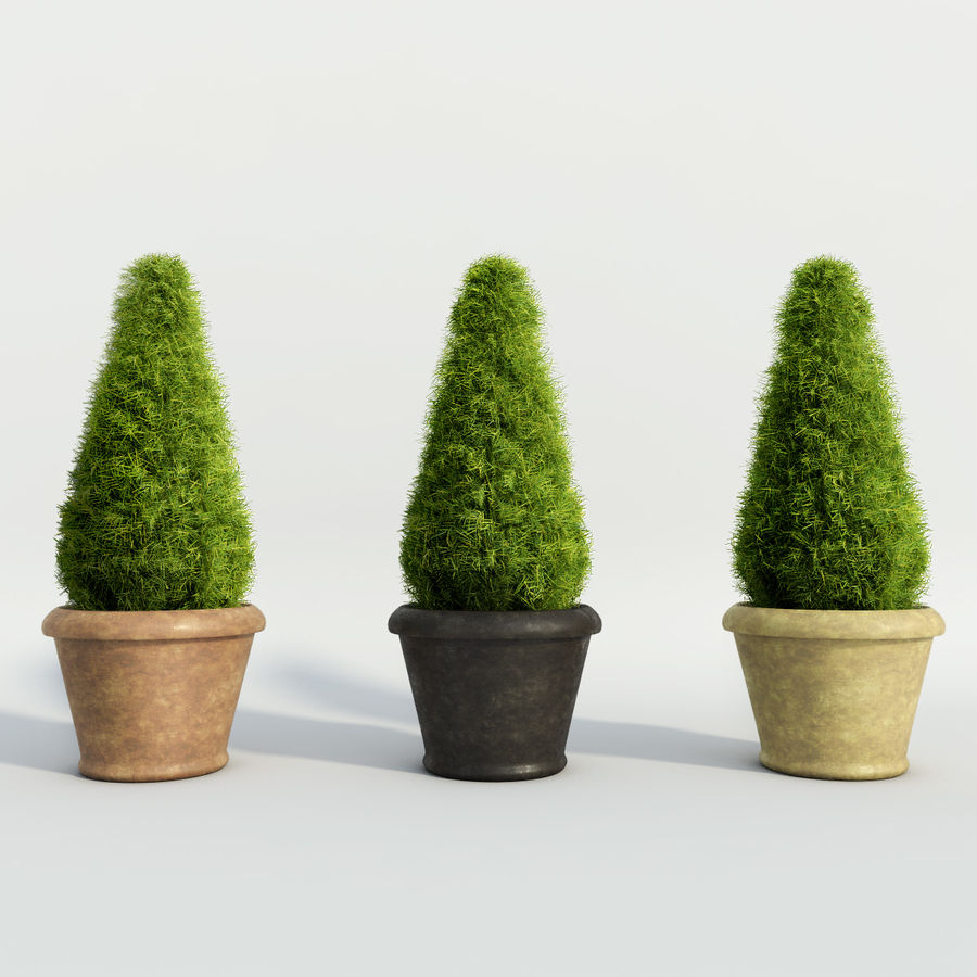 Fir Plants in Pots royalty-free 3d model - Preview no. 2