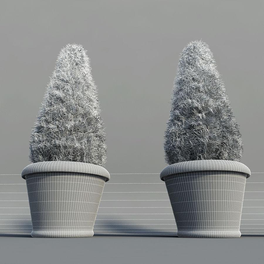 Tannenpflanzen in Töpfen royalty-free 3d model - Preview no. 10