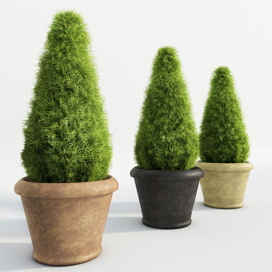 Tannenpflanzen in Töpfen royalty-free 3d model - Preview no. 3