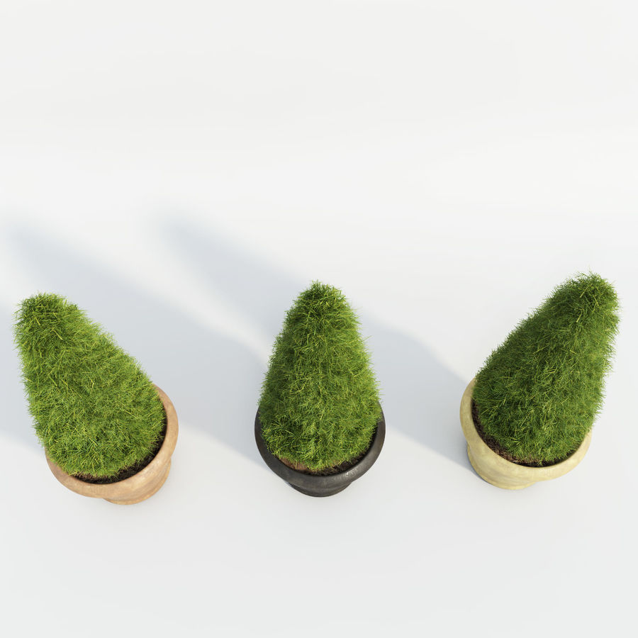 Fir Plants in Pots royalty-free 3d model - Preview no. 4