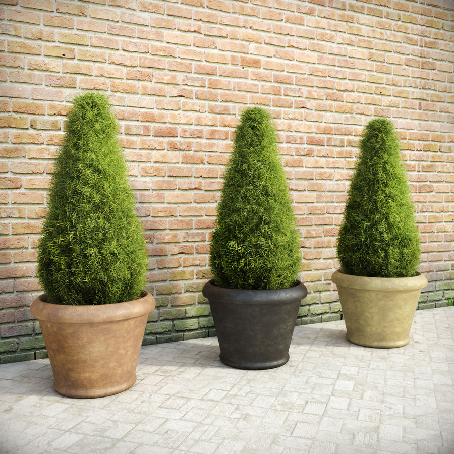Fir Plants in Pots royalty-free 3d model - Preview no. 1