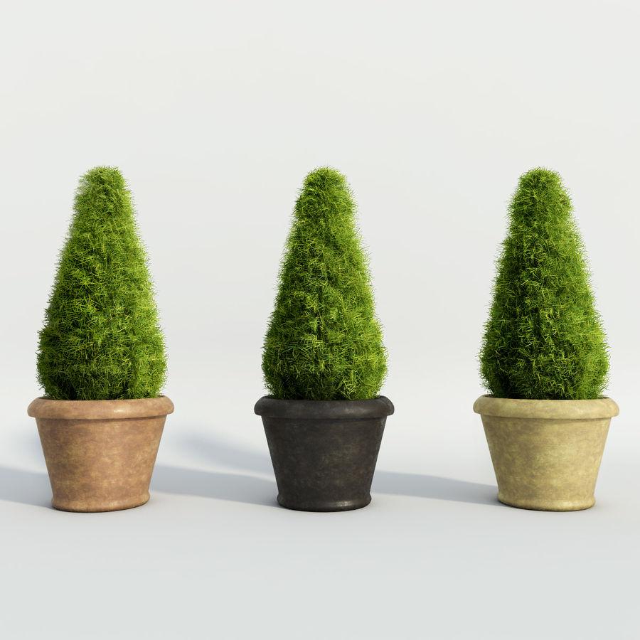 Tannenpflanzen in Töpfen royalty-free 3d model - Preview no. 2