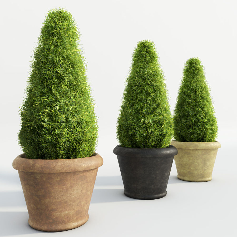 Fir Plants in Pots royalty-free 3d model - Preview no. 3