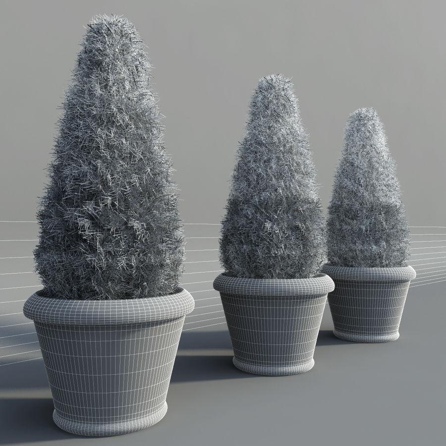 Tannenpflanzen in Töpfen royalty-free 3d model - Preview no. 8