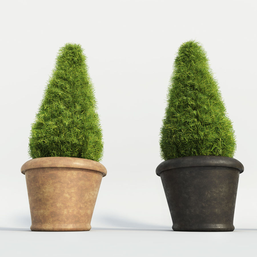 Fir Plants in Pots royalty-free 3d model - Preview no. 5