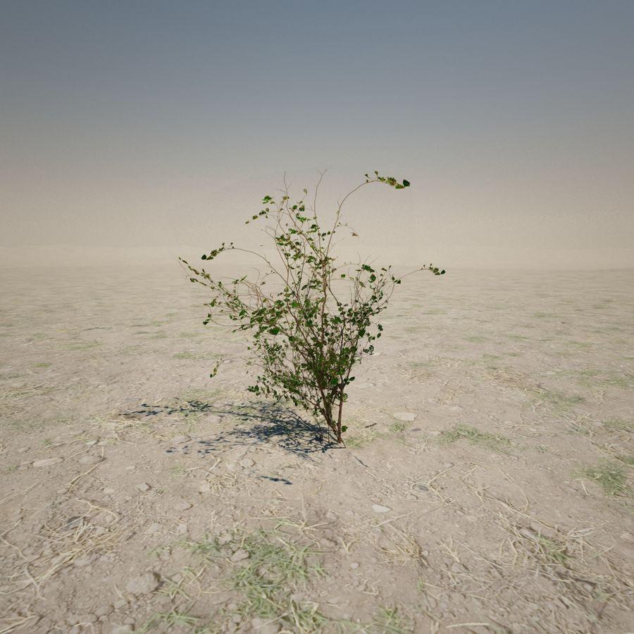 Petite plante du désert royalty-free 3d model - Preview no. 1
