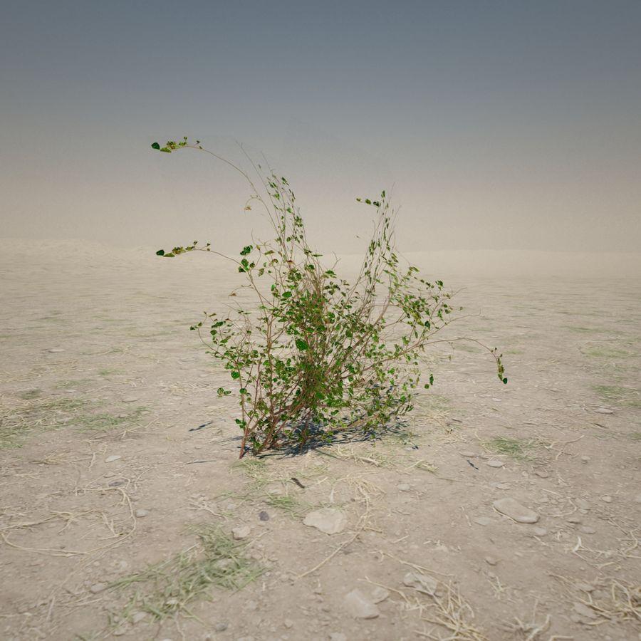 Petite plante du désert royalty-free 3d model - Preview no. 5