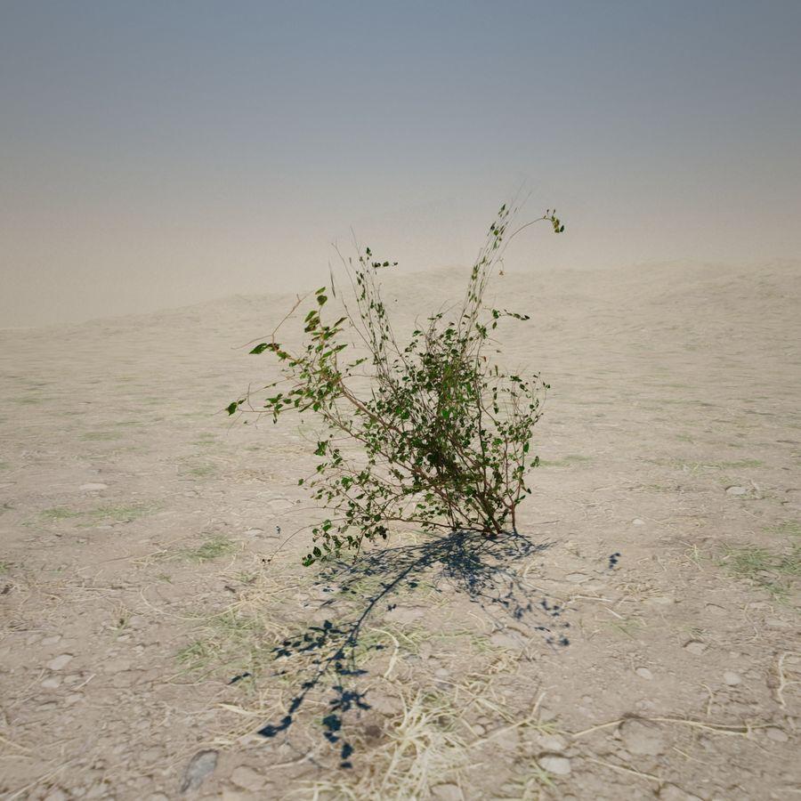 Petite plante du désert royalty-free 3d model - Preview no. 3