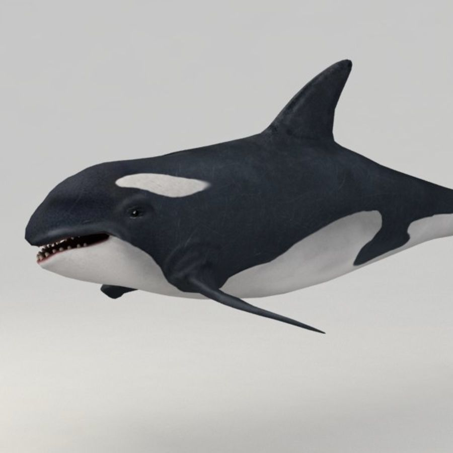 Orca aparejado royalty-free modelo 3d - Preview no. 4