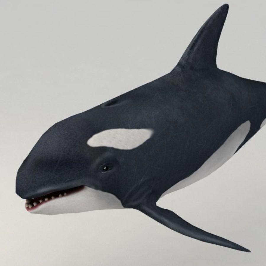 Orca aparejado royalty-free modelo 3d - Preview no. 3