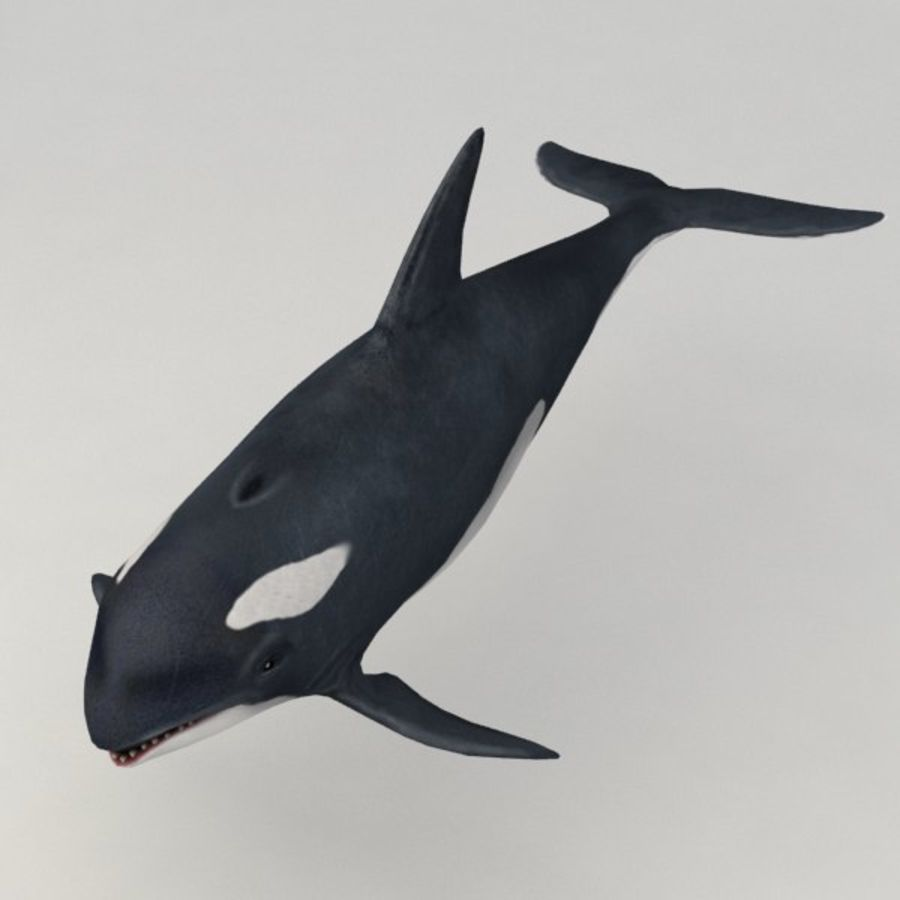 Orca aparejado royalty-free modelo 3d - Preview no. 2
