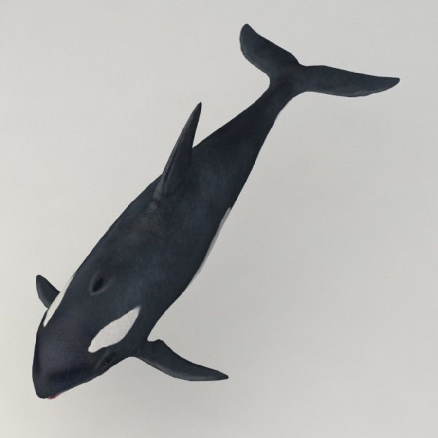 Orca aparejado royalty-free modelo 3d - Preview no. 5