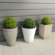 Shrubs in Pots 3 3d model