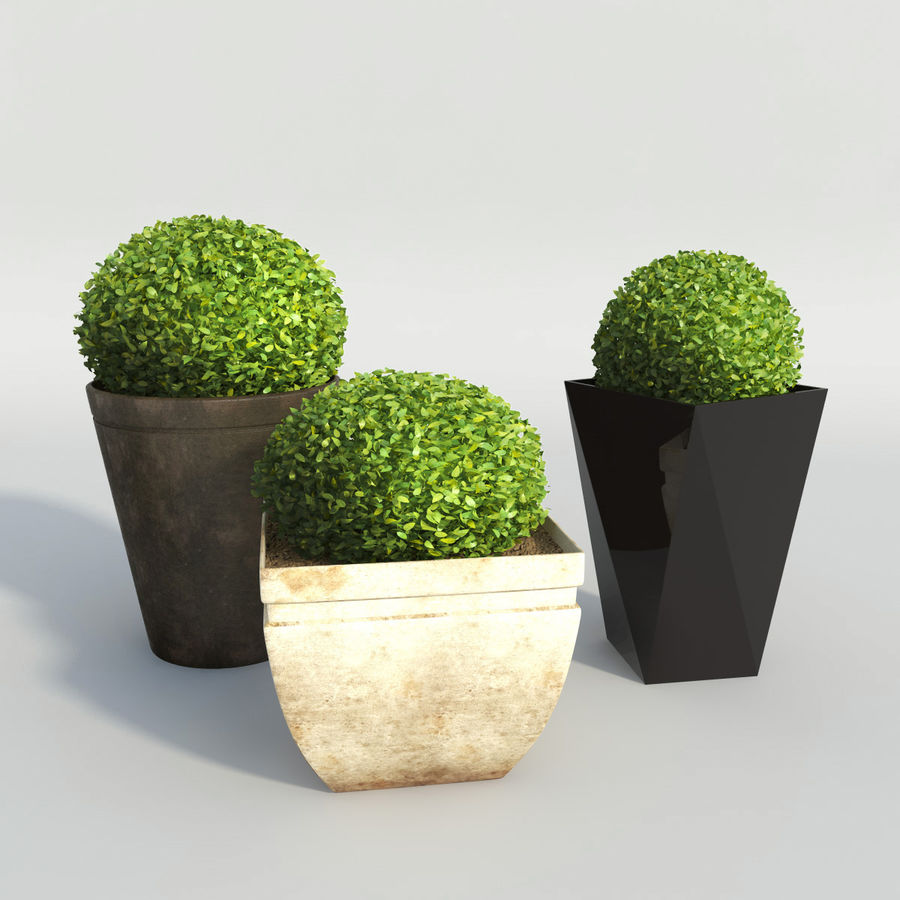 Shrubs in Pots royalty-free 3d model - Preview no. 2