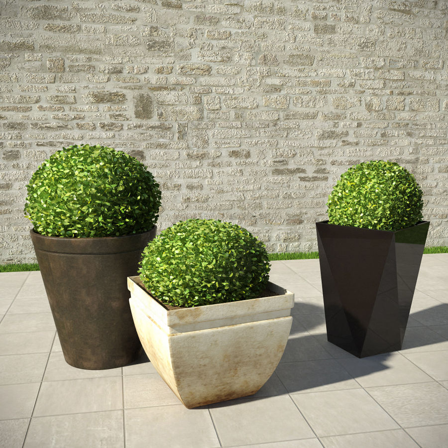 Shrubs in Pots royalty-free 3d model - Preview no. 1