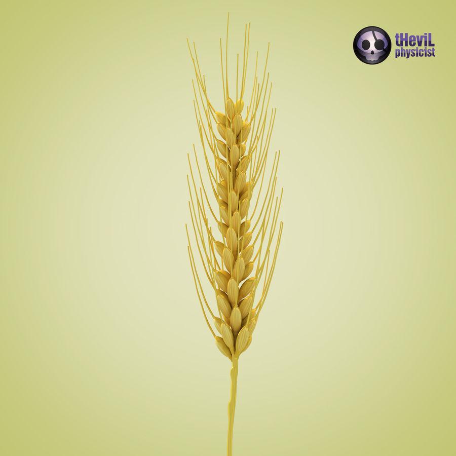 Wheat 3D Model $30 -  unknown  xsi  obj  max  lwo  fbx  c4d