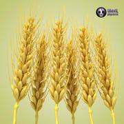 小麦 3d model