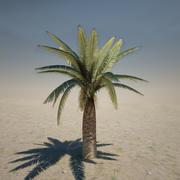 Średnia palma 3d model