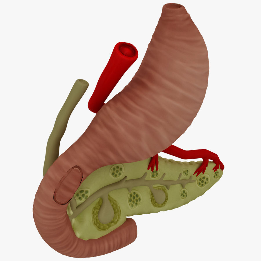 Pancreas Anatomy royalty-free 3d model - Preview no. 4