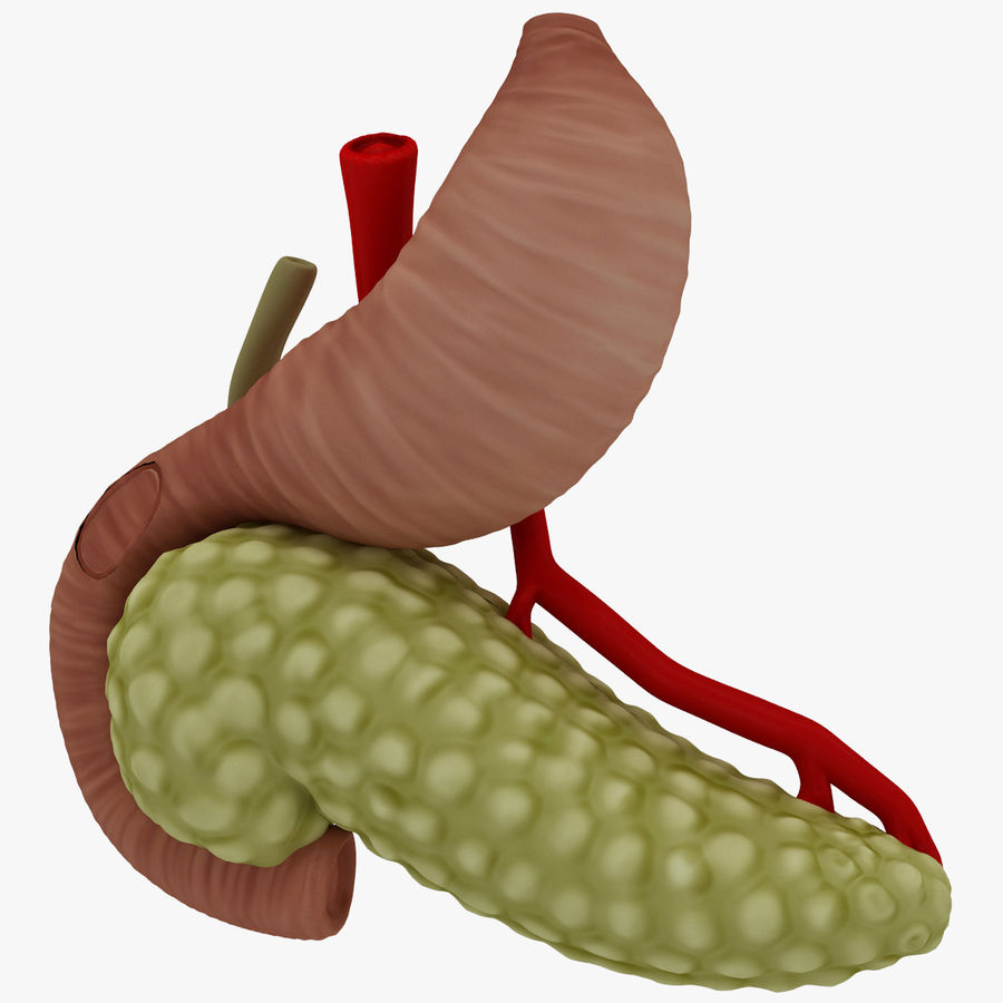Pancreas Anatomy royalty-free 3d model - Preview no. 11