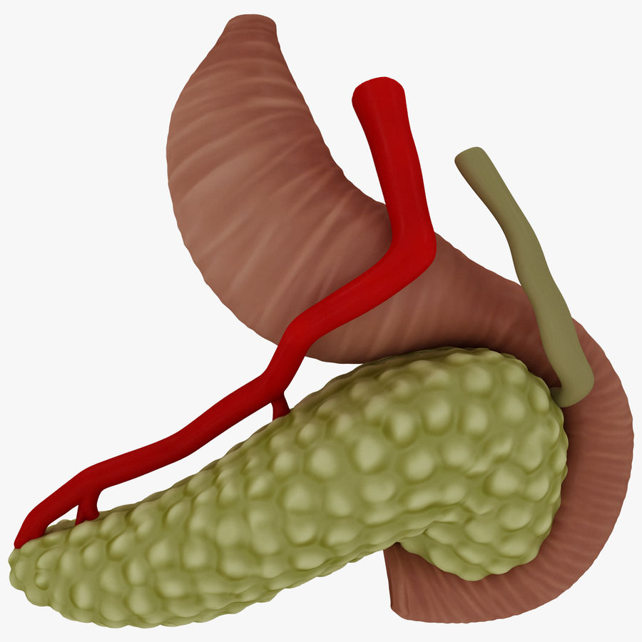 Pancreas Anatomy royalty-free 3d model - Preview no. 6