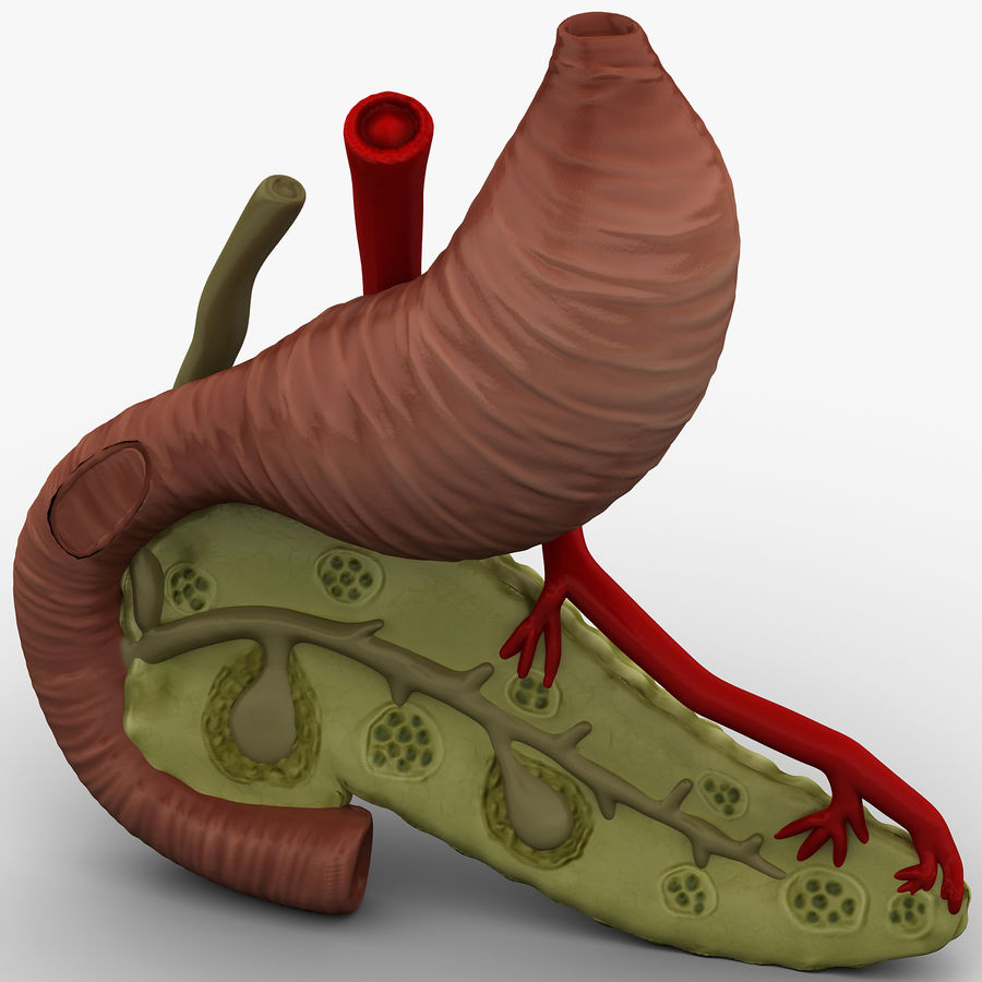 Pancreas Anatomy royalty-free 3d model - Preview no. 2