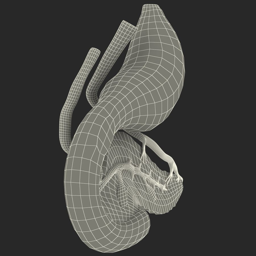 Pancreas Anatomy royalty-free 3d model - Preview no. 29