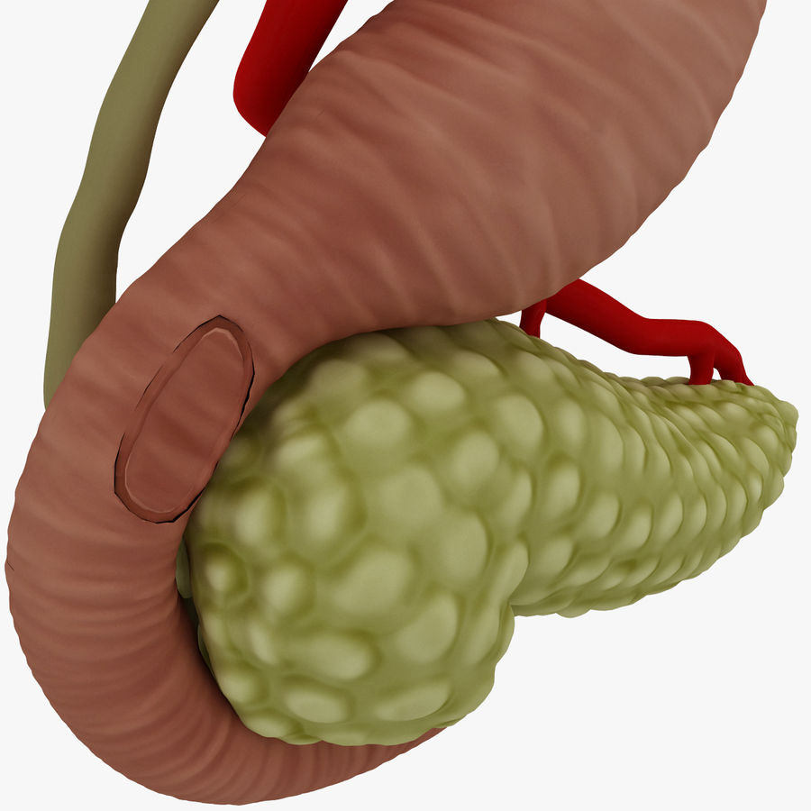 Pancreas Anatomy royalty-free 3d model - Preview no. 13