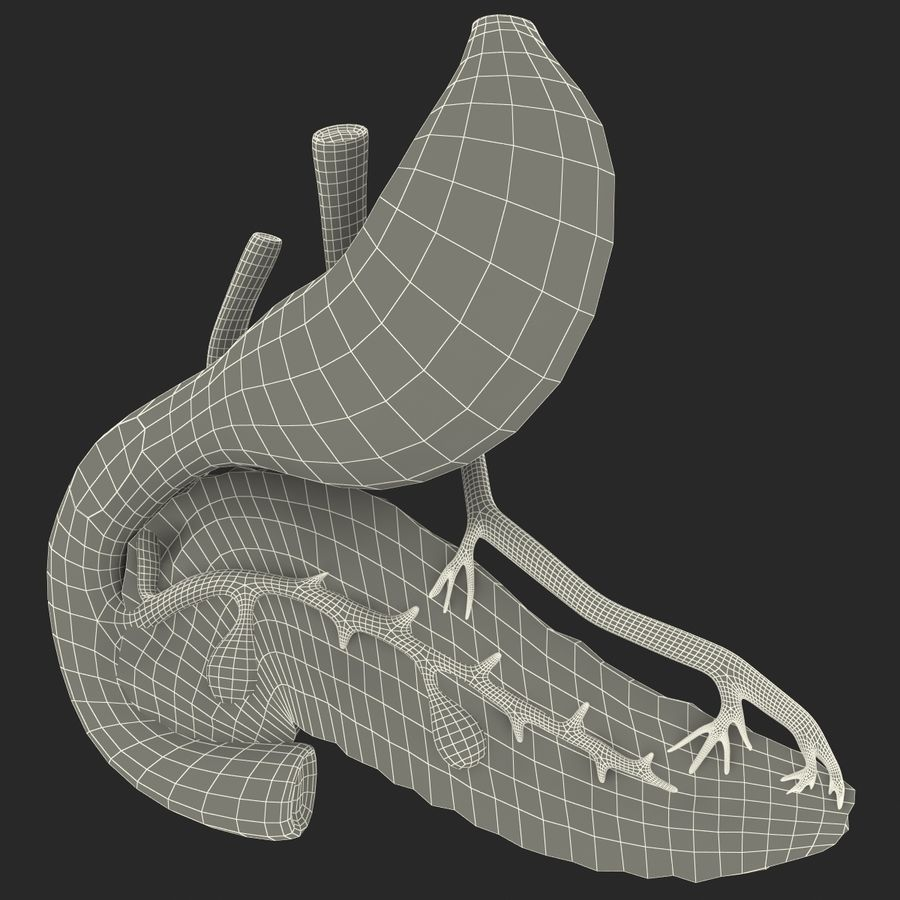 Pancreas Anatomy royalty-free 3d model - Preview no. 25