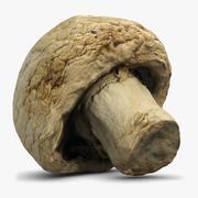 Mushroom 5 Agaricus Campestris 3d model