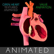 Heart Section Animated interior 3d model