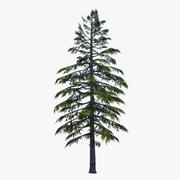 Árvore de pinheiro 3d model