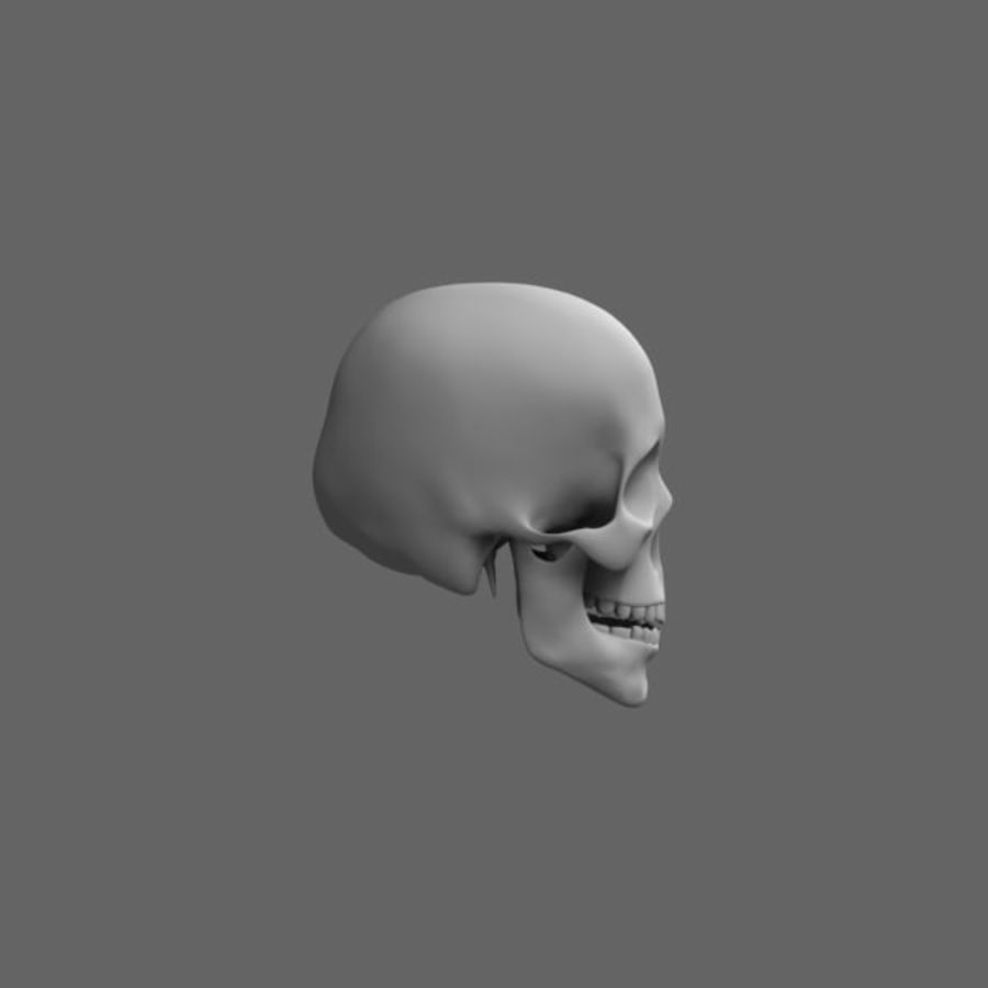 Human Skull royalty-free 3d model - Preview no. 3