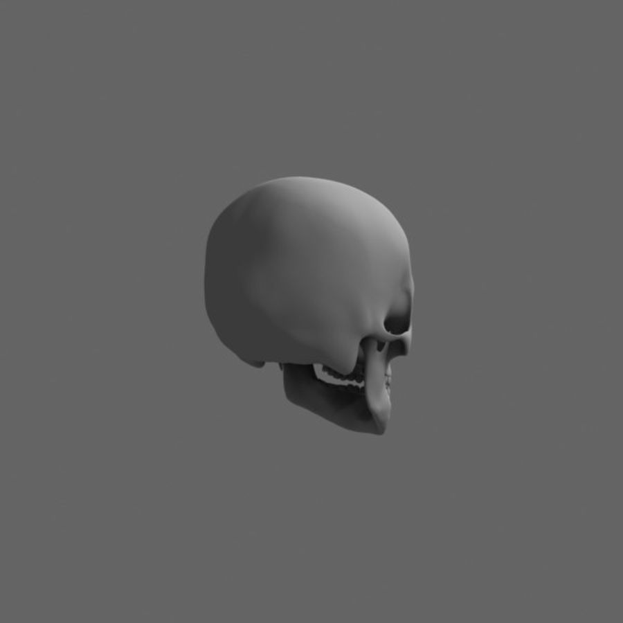 Human Skull royalty-free 3d model - Preview no. 4