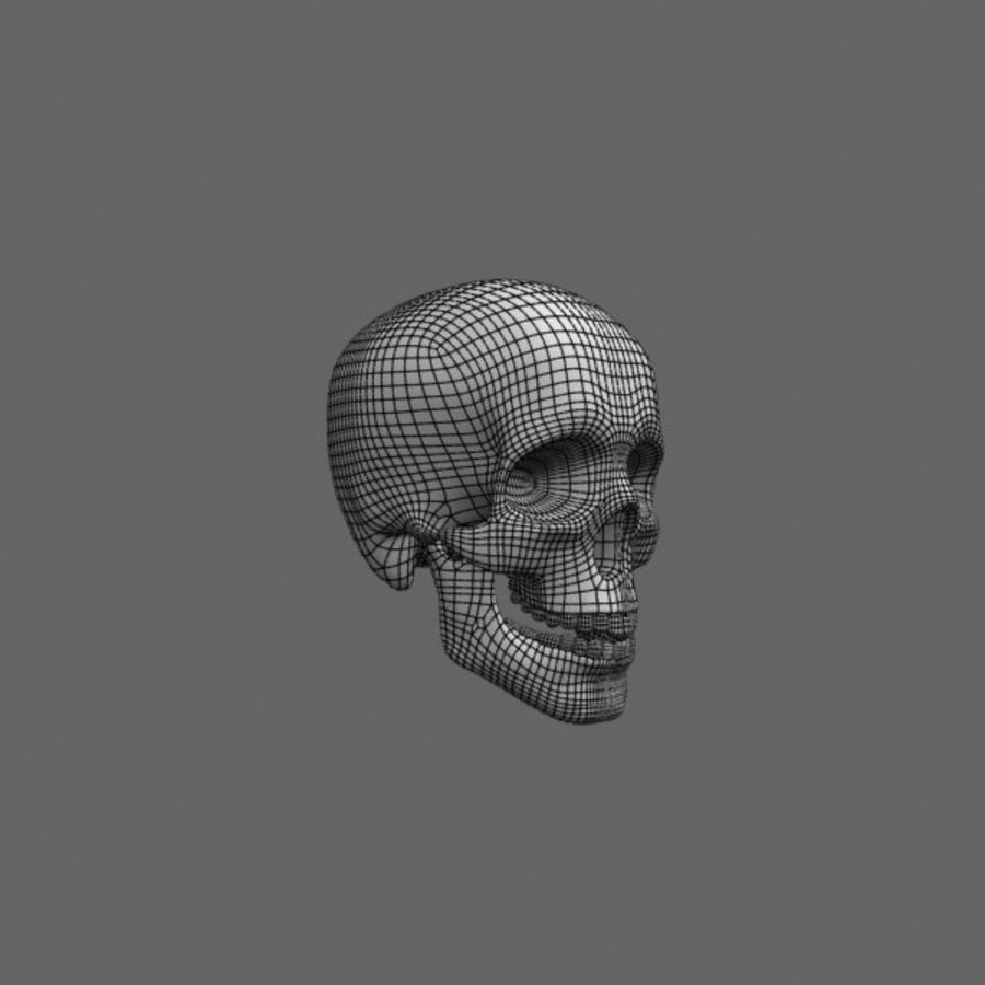 Human Skull royalty-free 3d model - Preview no. 10