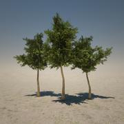짧은 나무 3d model