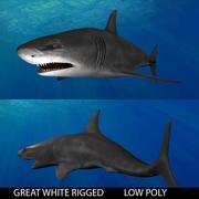 great white shark 3d model