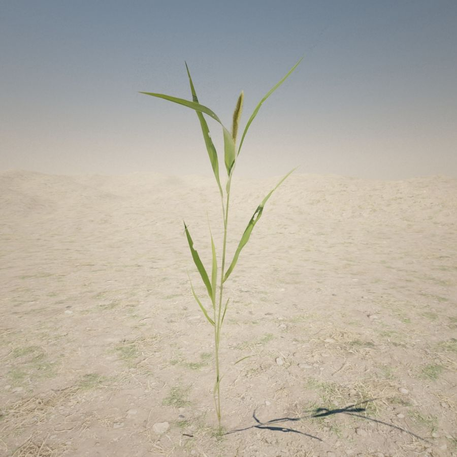 Small Plant royalty-free 3d model - Preview no. 3