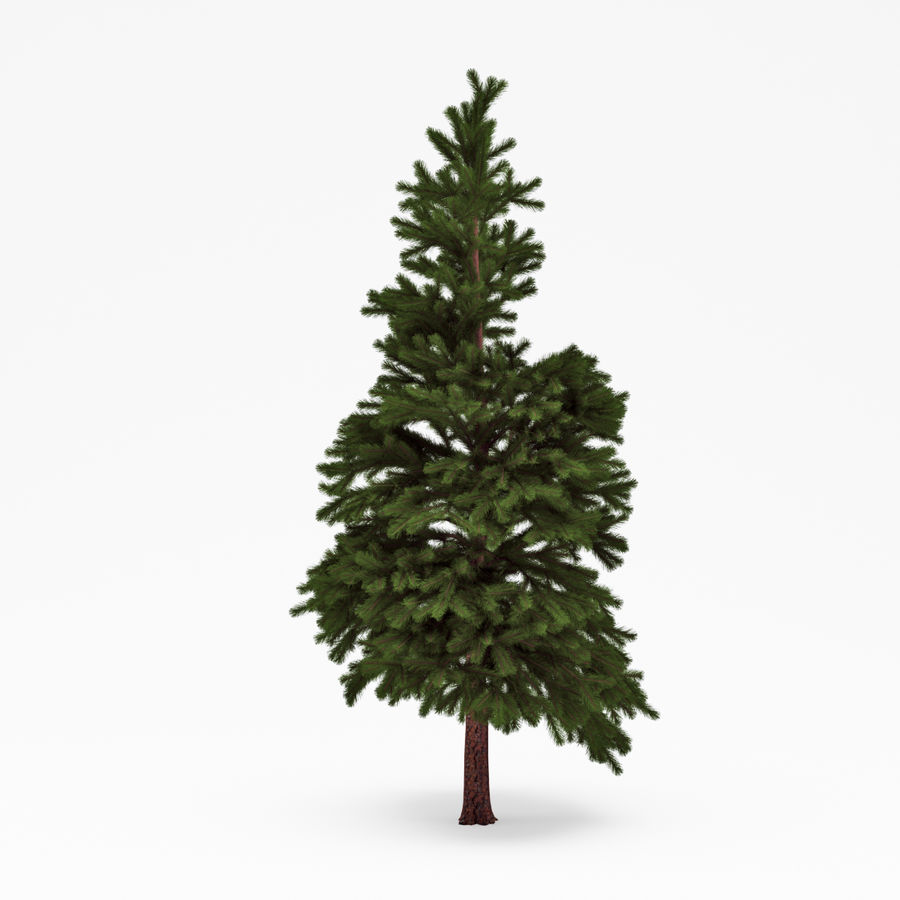 Conifer 022 royalty-free 3d model - Preview no. 1