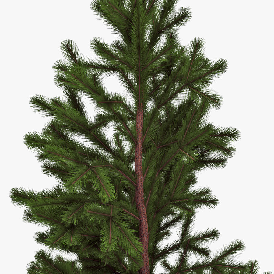 Conifer 022 royalty-free 3d model - Preview no. 4