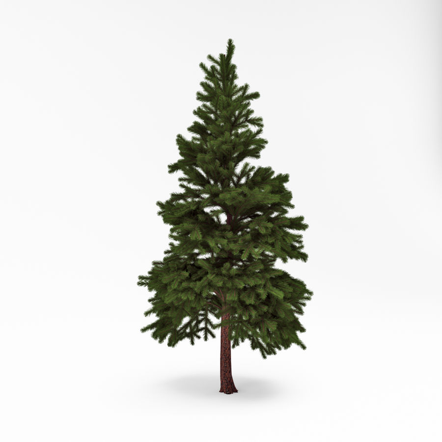 Conifer 022 royalty-free 3d model - Preview no. 2